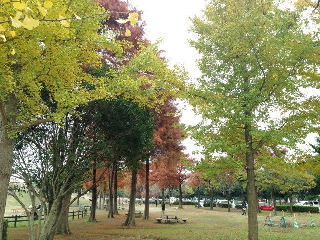 みさと公園・紅葉